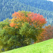 Black Forest: Fall Colors