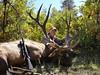 New Mexico Elk Hunt 56