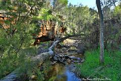 Alligator Gorge (Ray Swann) Tags: water sandstone alligator gorge range quartzite flinders