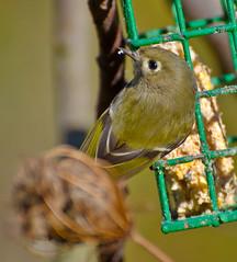 Watching you Human.Explored (Omygodtom) Tags: park wild bird nature oregon portland nikon feather 70300mm flycatcher oaksbottom d7000