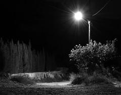El Camino (I) (ndrg) Tags: night noche sot de chera sote sotdechera ndrg ndrg2 farola camino path senda light blancoynegro blackandwhite oscar jimenez oscarjimenez óscarjiménez