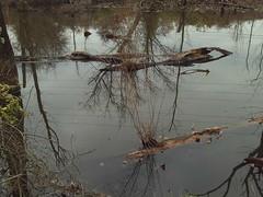 (William Keckler) Tags: november winter lake water polaroid native pennsylvania harrisburg winterlandscape darkday contemporarylandscape winterlake wildwoodlake