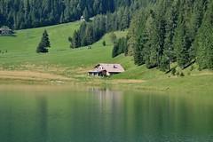 (erikaportesi) Tags: verde green alberi casa pino prato montagna laghetto pineta lova