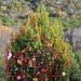 Trees_of_Loop_360_2013_059