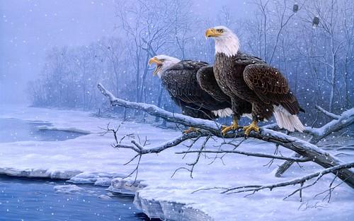 eaglesnow2