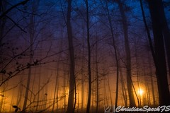 Foggy Trees (christian speck) Tags: trees fog night forest 35mm outdoors schweiz switzerland suisse sony lausanne arbres nuit foret mystic sauvabelin rx1 brouyard