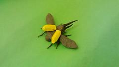 Hercules Beetle-Shuki Kato (Lambert_G) Tags: origami beetle hercules shukikato