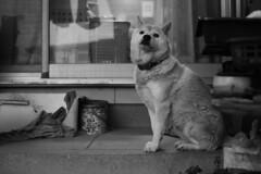 PhoTones Works #4267 (TAKUMA KIMURA) Tags: photones sd1 landscape scenery nature monochrome animal dog house 風景 景色 自然 家 犬 モノクロ 動物 takuma kimura 木村 琢磨 木村琢磨
