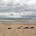 Der Ostseestrand bei Binz (Rügen) (4) thumbnail