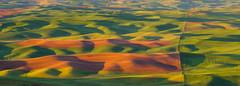 Steptoe Butte Panorama (CraigGoodwin2) Tags: rollinghills wheatfields palouse easternwashington drylandfarming steptoebutte steptoebuttestatepark