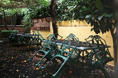 Ash (Shahrazad_84) Tags: trees green leaves chairs january tables ash sicily citrus taormina etna eruption sicilia
