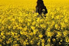 Yellow mercy (Marie Granelli) Tags: yellow skne explore sdersltt