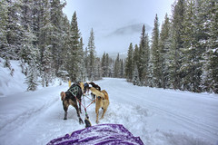 running in the winter paradise. (ShanLuPhoto) Tags: winter snow canada banff lakelouise dogsledding banffnationalpark