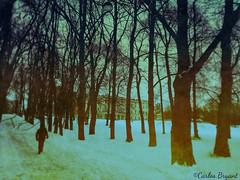 (C.Bry@nt) Tags: park street parque snow apple oslo norway norge calle gate nieve palace norwegian gata noruega akershus scandinavian palacio iphone parken norsk slottet norske skandinavia iphone5 iphoneography