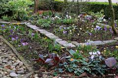 Voorjaarsvoortuin (Henk M gardenphotoblog) Tags: flowers garden spring tuin bloemen voorjaar nimg8901