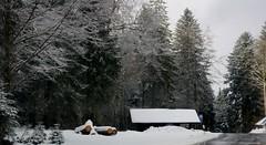 Besneeuwd bos. (limburgs_heksje) Tags: winter schwarzwald zwarte woud