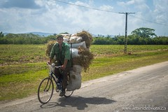 A soldier? rides past with bundles of grass loaded onto his bicycle; Guantanamo, Cuba.