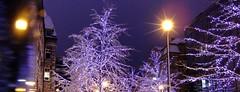 Nesten julestemning (g.rokke) Tags: lys licht light trær trees bomen jul christmas kerstmis blåtime bluehour lilletorget trondheim trøndelag sørtrøndelag norge norway noorwegen