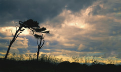 Arms Outstretched (charhedman - off for a few days) Tags: fortwordenstatepark trees entwined sky clouds grass silhouettes washingtonstate