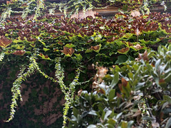 Ivy leaves (Micheo) Tags: paseo walk city ciudad detalles details
