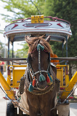 Superstrong Horse (HansPermana) Tags: lombok indonesia pulau island holiday tropical andong chariot horse transportation manual tourist animal traditional