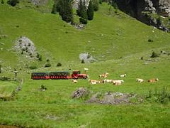Tschu-Tschu-Bahn, Pllatal, Katschberg 2016-048 (suppenlaender) Tags: sterreich krnten salzburg alpen katschberg katschberghhe berge natur austria pllatal tschutschubahn kuh rind cow wiese