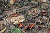. (oOTheSmallOneOo) Tags: compost fall autumn trash garden gardening fruit canoneos60d still life brandenburg trebnitz