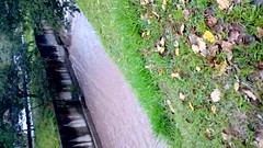 Rio Pequeno (Wellington Marques de Oliveira) Tags: riopequeno córrego