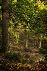 Enchanted (RD400e) Tags: canon eos 5d mk3 ef 85mm f12 gitzo bwpolariser padley gorge peakdistrictnationalpark trees woods autumn lightroom5 color efex pro4