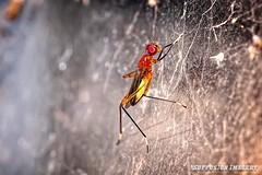 10-18-2015-05am-27-10-074--NIKON D700-07-device-2000-wm (iSuffusion) Tags: d700 tampa tokina100mm28macro florida insects macro nikon gibsonton unitedstates us