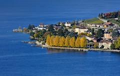 Les arbres jaunes (Diegojack) Tags: paysages automne lman lac arbres jaunes cully plonge