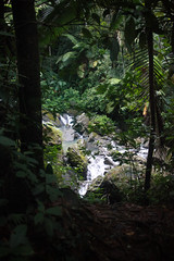 "El Yunque (3 of 5)-2 • <a style=""font-size:0.8em;"" href=""http://www.flickr.com/photos/9778240@N07/30524787044/"" target=""_blank"">View on Flickr</a>"