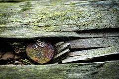 Another Nail in the........ (Graham'M) Tags: macro nail wood closeup stillife rotting