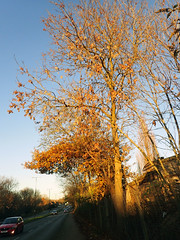 2016_11_280004 (Gwydion M. Williams) Tags: coventry britain greatbritain uk england warwickshire westmidlands tree trees