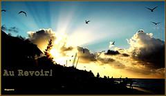 Moment magique (Huguette T.) Tags: cuba nature beach plage mer sea nuages ciel sunset coucherdesoleil silhouettes oiseaux arbres varadero