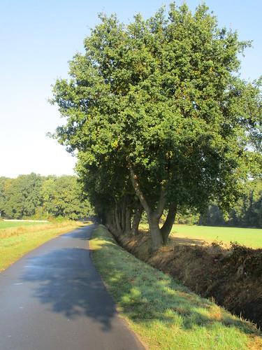 Eichen-Allee, ländliche Gegend rund um Neustadt am Rübenberge , NGID1987341187