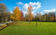 autumn colors (06) (Vlado Ferenčić) Tags: autumn autumncolours novidvori trees zaprešić hrvatska croatia nikond600 nikkor173528
