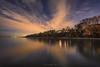 My purple dream 紫色的梦幻 (Dahai Z) Tags: beach bluehour evening glencoebeach glencoeillinois lakemichigan longexposure night nikcolorefexpro trees twilight water