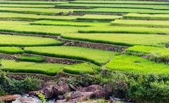 Terraced fields@Araku (ashok kolluru) Tags: araku vizag india