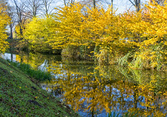 Reflections of autumn (David Feuerhelm) Tags: nikkor river autumn colour colourful reflections serene trees water calm calming bright nikon d7100