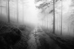 Lost (Goran Joka) Tags: path road muddyroad blackwhite blackandwhite monochrome silhouette silueta wood forest divibare mountain hiking fog serbia mist outdoor nature