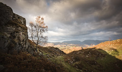 Holme Fell (Lake District) 06/11/2016 (Matthew Dartford) Tags: bokeh cumbria hills holmefell lakedistrict mountain rocks rocky tree