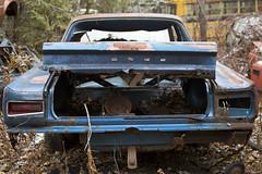 Open Ended Tale (cjb_photography) Tags: car dodge junkyard mcleansautowreckers miltonon rust truck trunk