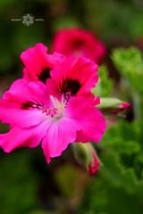 IMG_7534 (Almu_Martinez_Jiménez) Tags: galicia fisterra finisterre meigas sunset encanto flores playa mardefora tempestad