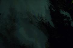 night shadow (Crystalline Radical) Tags: shadow night dark blue green     tree