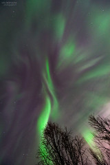 When the sky explodes (AngryTheInch42) Tags: aurora auroraborealis kiruna sweden astrophotography space astronomy corona northernlights arctic