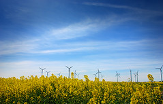 Summer Colours (Pixelglo Photography) Tags: uk blue field yellow clouds nikon energy wind farm harvest bluesky farmer wispy windfarm windfarms renewable lightblue rapeseed renewableenergy mablethorpe wispyclouds yellowfield rapefield rapeseedfield d80 nikond80 lightblueskies