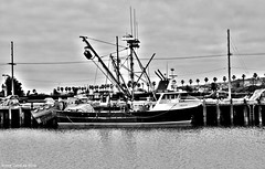 Seiner (Lenny Lloyd da Silva) Tags: boats harbor fishing fisherman pacific ships working pacificocean socal commercial fishingboats oceanview sanpedro workingboats seiners purseseiners commercialfishingboats coastlineboats