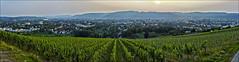 Breiter Weinberg über Trier (Helmut Reichelt) Tags: leica panorama germany deutschland abend trier mosel weinberg rheinlandpfalz m9 blauestunde leicasummilux35mmf14asphii colorefexpro4 captureone7