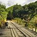 Un ponte instabile sul fiume di Semuc Champey